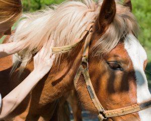Reiki for horse