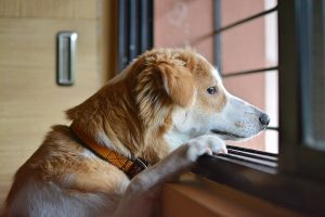 help separation anxiety in dogs
